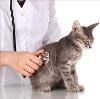 Ветеринарные клиники в Пугачеве
